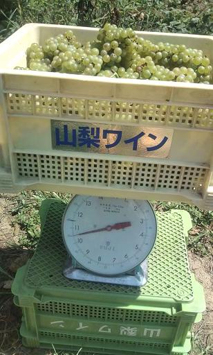 10kg.JPG